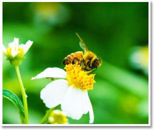 専用養蜂場を持つメーカーと共同開発!栄養価を一番多く含む生後約21日目のオスのみを使用!