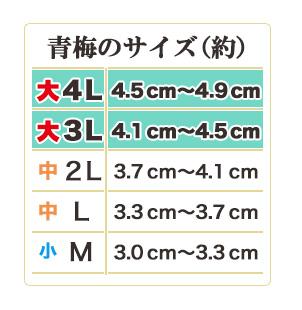梅干しサイズ表