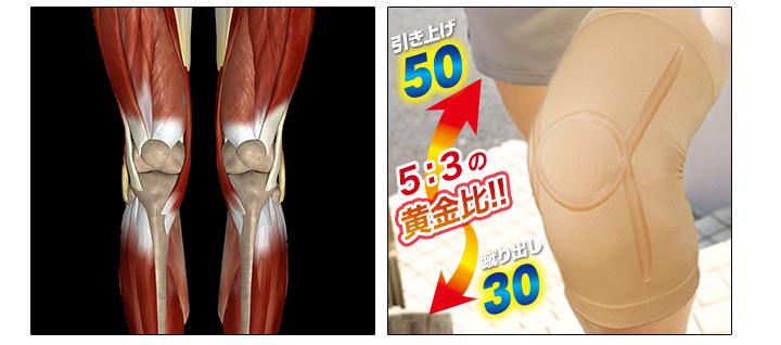 膝の黄金比率