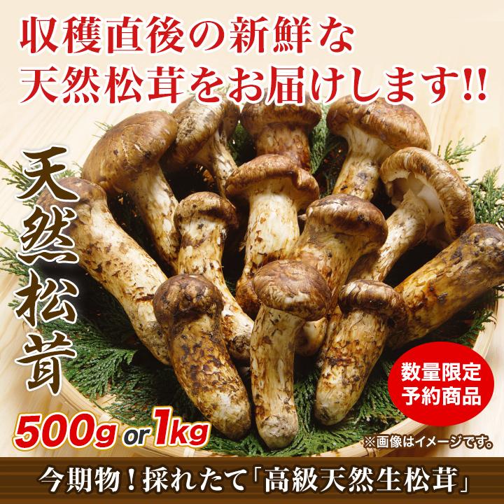 商品名:今期物!採れたて「高級天然生松茸」