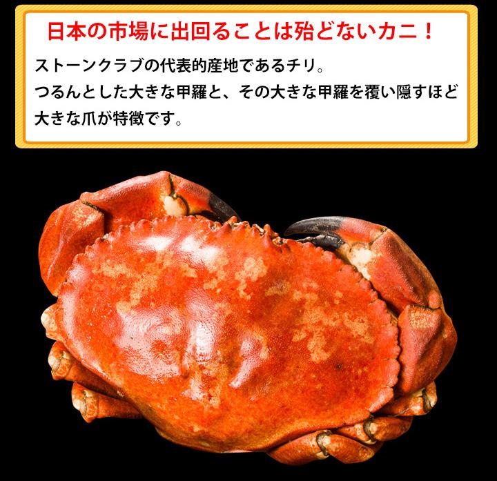 ストーンクラブは、日本の市場に出回ることは殆どないカニです!