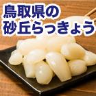 鳥取県産「不揃い砂丘らっきょう」4袋/8袋