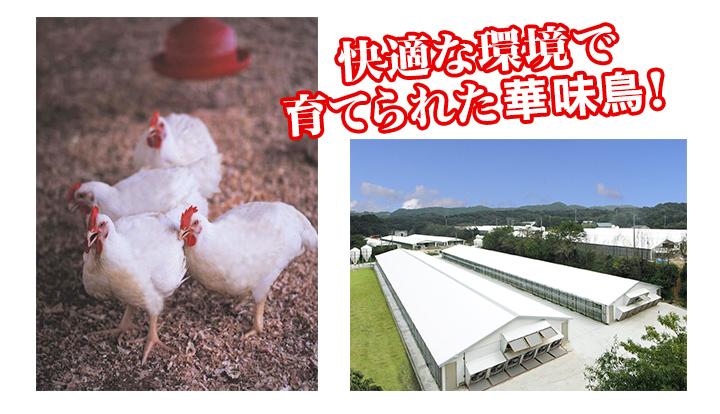 九州産銘柄鶏「華味鳥」
